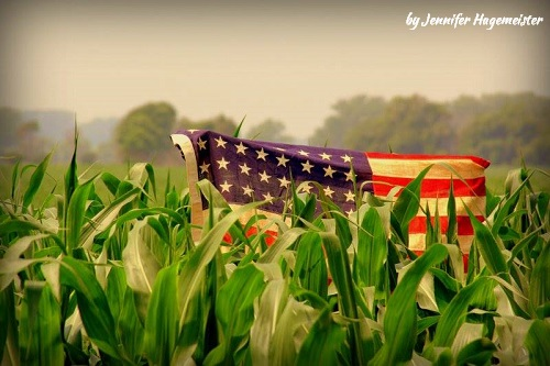 More Than Knee High by the 4th 2015 Image